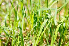 Free Wet Grass Stock Photos - 8112363