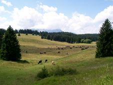 Free High-mountainous Summer Landscape. © Tretyakova. Royalty Free Stock Image - 8112416
