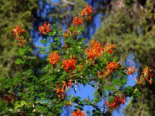 Free Sevilla Alcazar Garden Stock Photo - 8113430