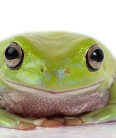 Free Frog Stock Photos - 8114963