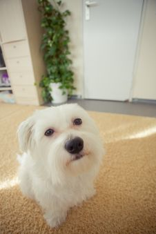 Free Dog Stock Photos - 8115333