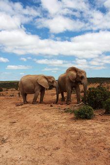 Free Elephants Under Blue Sky Royalty Free Stock Photos - 8115578