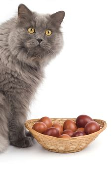 Free Cat And Easter Eggs Stock Photography - 8116472