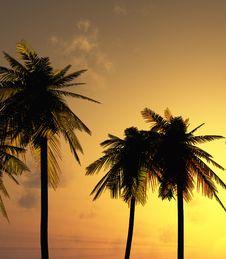 Free Beautiful Sunset Royalty Free Stock Image - 8117566