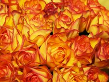 Free Bouquet Of Orange-yellow Roses Royalty Free Stock Photos - 8117618