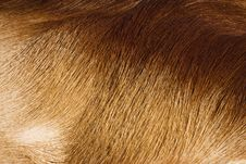 Free Fur Textures Stock Images - 8118434