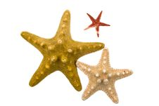 Free Starfishes Stock Photography - 8118972