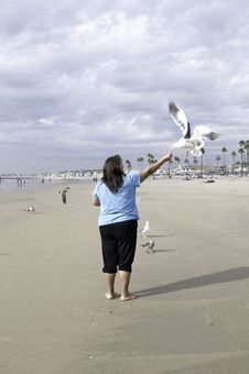 Free Lady Feeding Birds At The Beach Royalty Free Stock Images - 8119109