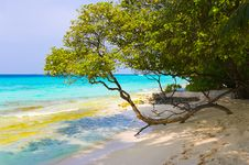 Free Tree On Tropical Beach Royalty Free Stock Image - 8119676