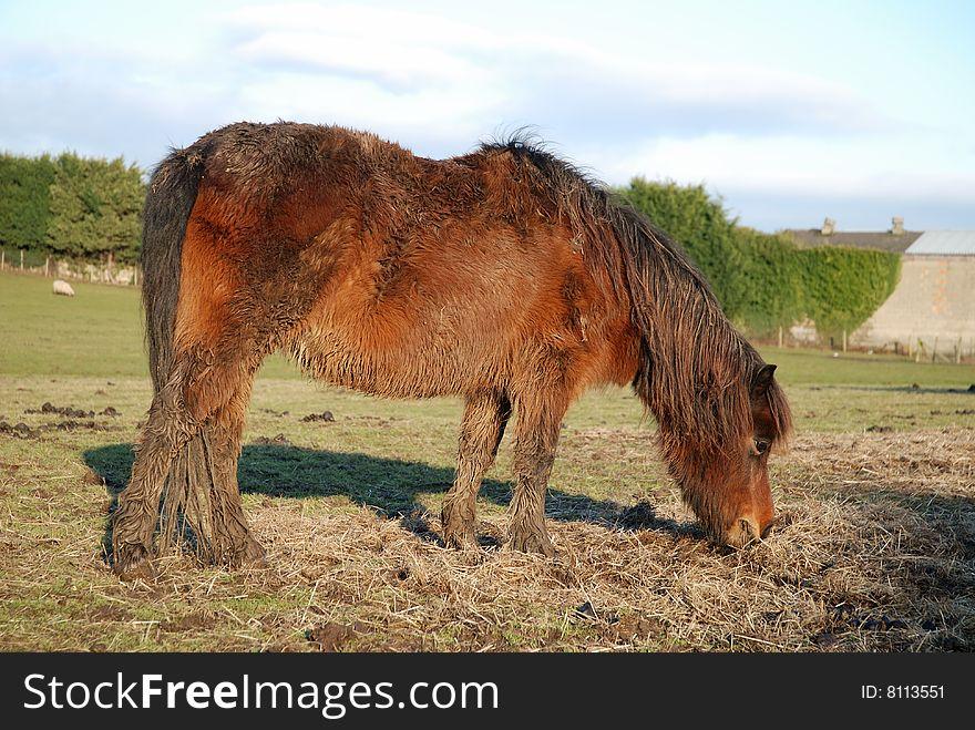 Neglected pony