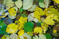 Free Autumn Leaves Royalty Free Stock Photography - 8121157