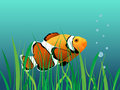 Free Clown Fish Royalty Free Stock Images - 8121589