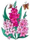 Free Gladiolus Stock Images - 8124444