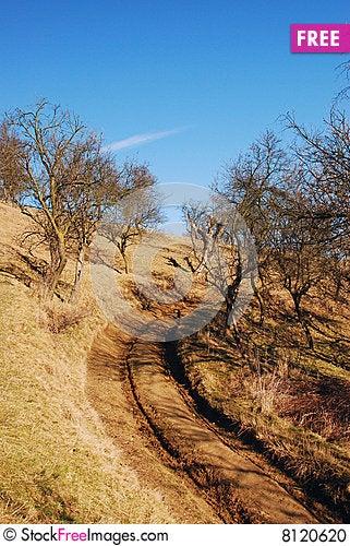Free Trees, Sky And Fog Stock Photo - 8120620