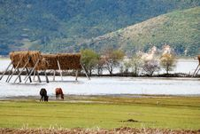 Free Lugu Lake Stock Photo - 8120210