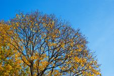 Free Autumn Royalty Free Stock Photography - 8120997