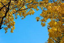 Free Autumn Royalty Free Stock Photo - 8121015