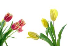 Free Tulips Stock Images - 8122254