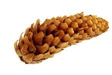 Free Cone Coniferous Stock Photo - 8124350