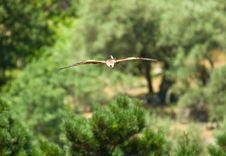Free Red Kite Royalty Free Stock Image - 8127786