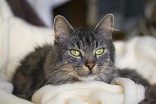 Free Cat Stock Image - 8128191