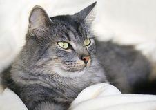 Free Cat Stock Photos - 8128233