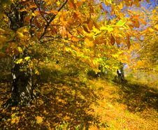 Free Autumn In Forest Royalty Free Stock Photos - 8128678