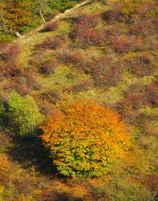 Free Autumn Tree Stock Image - 8128711