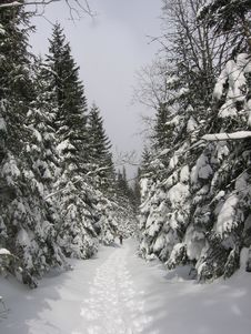 Free Hiking Trail In Winter Stock Photography - 8129132