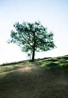 Free Autumn Tree Royalty Free Stock Photos - 8129148