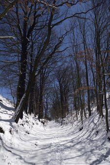 Free Moonlight Trees Stock Photos - 8129893