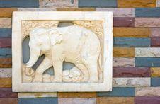 Free Elephant Stock Image - 8130471