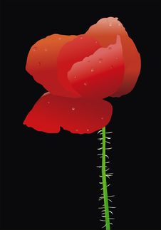 Free Vector Poppy Stock Photography - 8131012