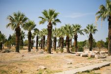Free Palms In Turkey Royalty Free Stock Photography - 8131017