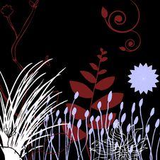Free Floral Design Black Royalty Free Stock Photo - 8131585