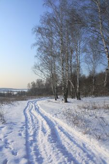 Free Winter Landscape Royalty Free Stock Image - 8132726