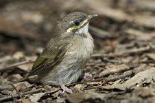 Free Baby Bird In Bark Royalty Free Stock Photo - 8132845