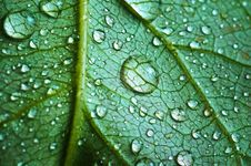 Free Beautiful Leaf With Drops Stock Images - 8133064
