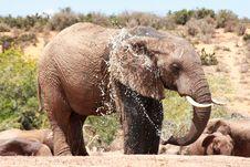 Free Elephant Spraying Royalty Free Stock Photo - 8133155