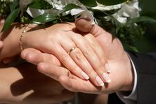 Free Hands With Wedding Rings Stock Photo - 8133350