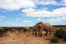 Free Elephant Herd Under Blue Sky Stock Photo - 8134400