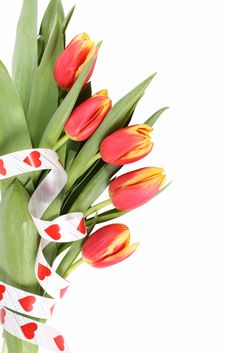 Free Tulip Flowers Isolated Stock Photo - 8136670