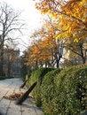 Free Autumn Alley Royalty Free Stock Photo - 8149885