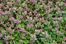 Free Green Spring Carpet Stock Photo - 8141040