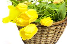 Free Tulips In The Basket Stock Photo - 8142530