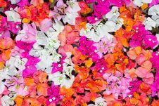 Free Petals Of Flowers Background Royalty Free Stock Photography - 8142687