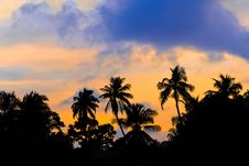 Free Silhouette Of Palms And Sunset Royalty Free Stock Photo - 8142715