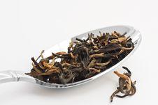 Free Green Tea Royalty Free Stock Photos - 8142758