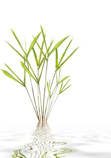 Free Bamboo Leaf Grass Beauty Stock Image - 8142941