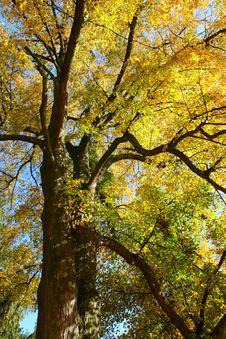 Free Autumn Nature Stock Photography - 8143662